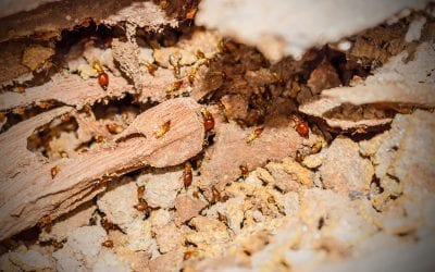 Learn How to Prevent Termites & Reduce Risks to Your Home