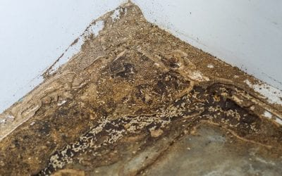 7 Signs of Termites at Home